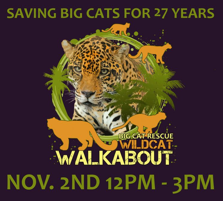 7b1cb15a069b2 Safari Days | Big Cat Rescue