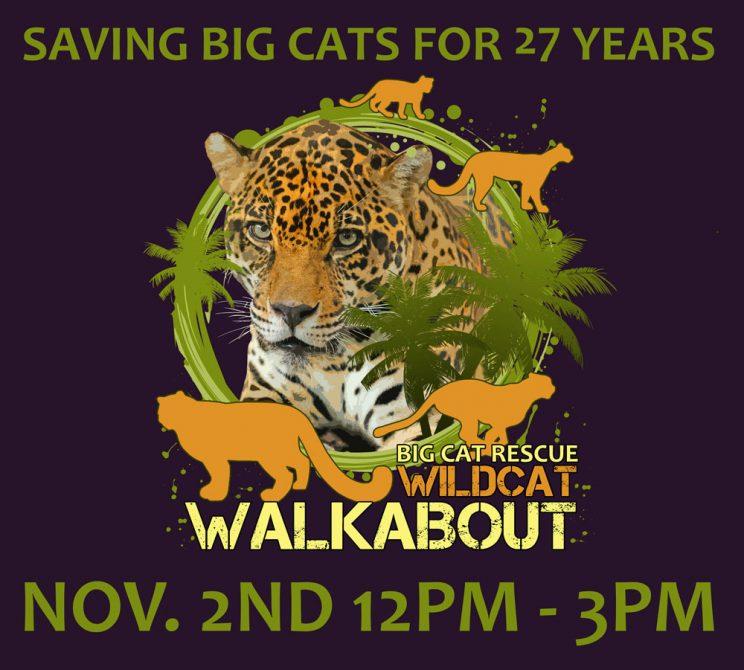 Wildcat Walkabout 2019