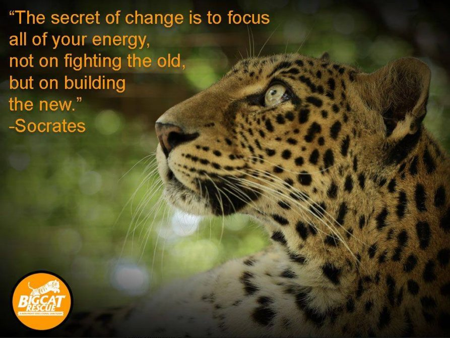 """The secret of change is to focus all your energy, not on fighting the old but on building the new"" ~ Socrates"
