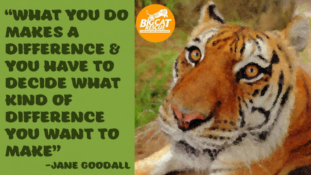 "Quotes and Memes - ""What you do makes a difference and you have to decide what kind of a difference you want to make"" ~Jane Goodall"