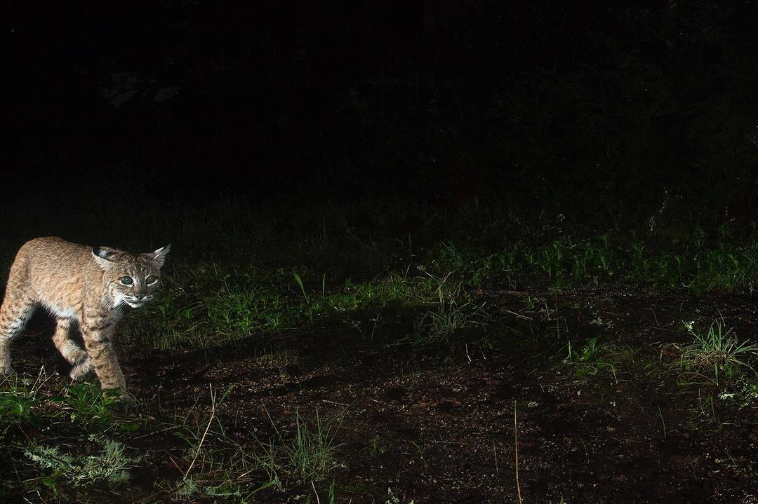 InSitu | Big Cat Rescue