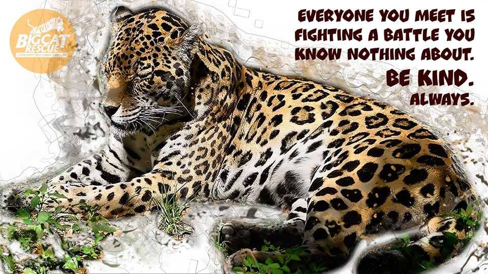 """Memes and Quote of the Day - """"Everyone you meet is fighting a battle you know nothing about. BE KIND! Always!"""""""