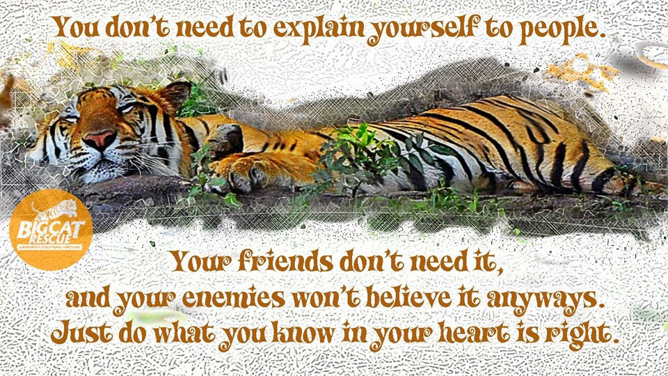 "Memes and Quote of the Dat - ""You don't need to explain yourself to people. Your friends don't need it, And your enemies won't believe it anyways. Just do what you know in your heart is right."""