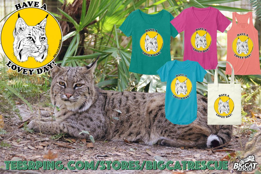 We are wishing you all a very Lovey Day! https://teespring.com/have-a-lovey-day Your purchase helps Big Cat Rescue provide rehab care of native bobcats and permanent care of nearly 60 abandoned and abused Big Cats.