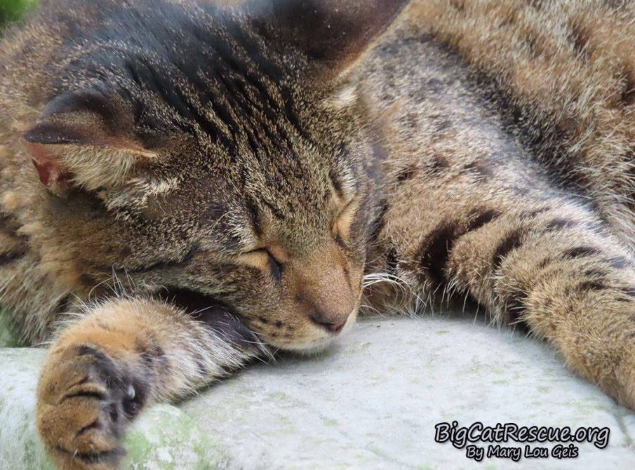 Loki Savannah is getting his FURiday night Zzzzzzz's
