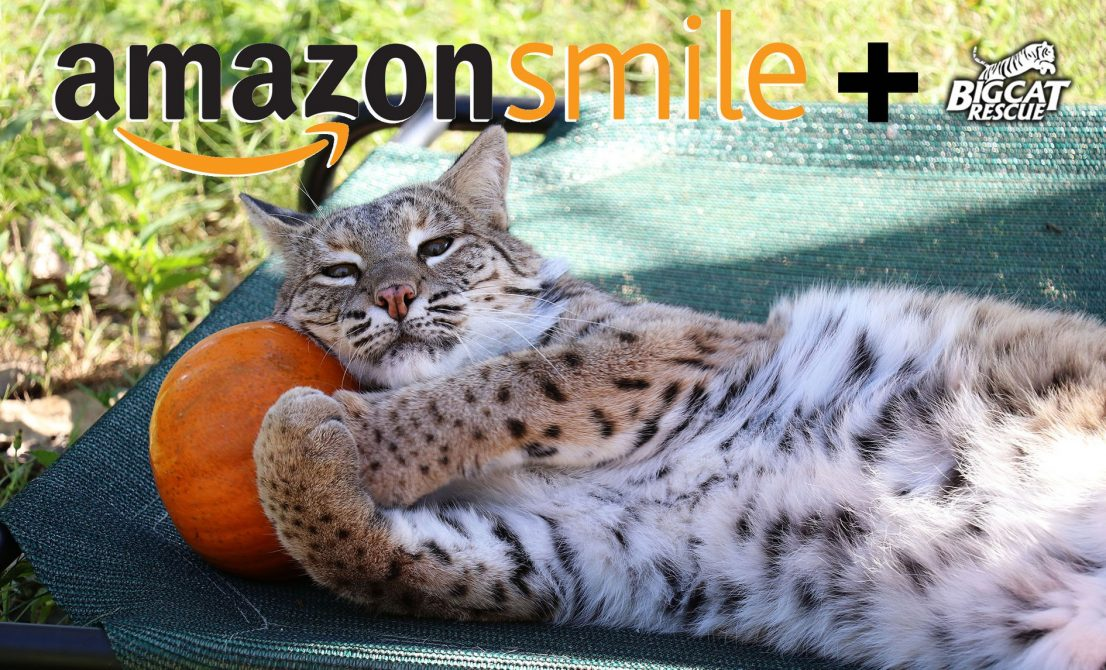 Help the Big Cats SMILE this Holiday Season! You can donate to the cats at NO COST TO YOU when you select BCR as your charity on Amazon Smile and shop Smile.Amazon.com instead of Amazon.com. It is exactly the same as regular Amazon EXCEPT when you use the Smile URL Amazon donates .5% of your purchase to BCR. It's added up to over $175,000 for the cats! Unique charity link https://smile.amazon.com/ch/59-3330495