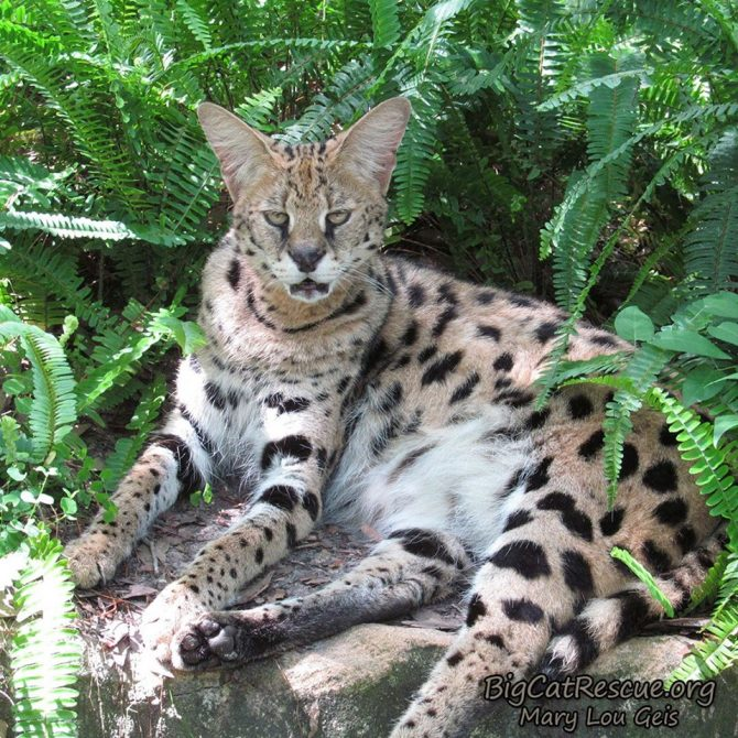 Can I hit the snooze button just one more time? ~ Nala Serval