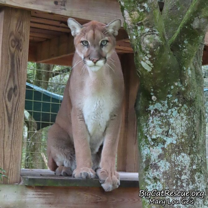 Did you bring a 'sicle? ~Ares Cougar