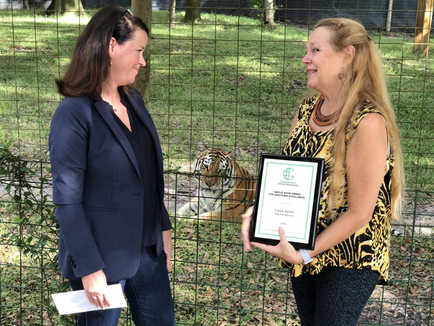 Big Cat Rescue's Founder Carole Baskin is being honored today by the Global Federation of Animal Sanctuaries (GFAS) as the 2019 recipient of the Carole Noon Award for Sanctuary Excellence! This prestigious award is given annually to a sanctuary or individual who embodies and puts into practice the GFAS philosophy of vision, dedication and excellence in animal care. Congratulations Carole!