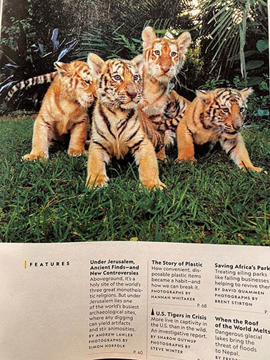 Sharon Guynup's article, The Tigers Next Door, in the 12.2019 issue of National Geographic is so well researched, documented and written that Carole wants everyone to read it. The images by her partner, Steve Winter, show tigers in places where you might never expect them to be. We want you to have a hard copy of the magazine because it makes a compelling case for why we need the Big Cat Public Safety Act to pass. It might just become the best tool you can have to change hearts, minds and laws.
