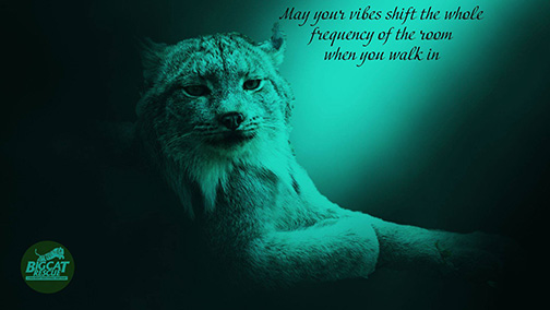 """Memes and Quote of the Day - """"May your vibes shift the whole frequency of the room when you walk in"""""""