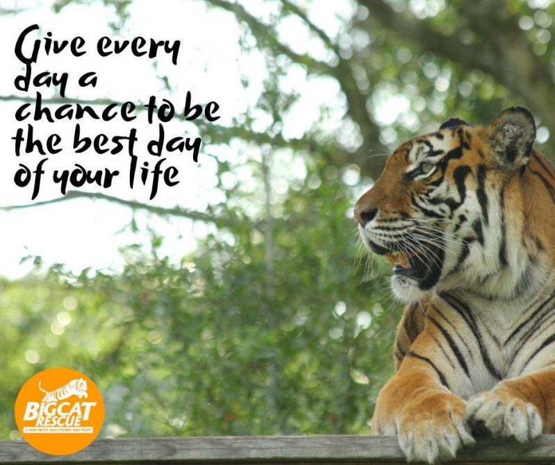 """Memes and Quote of the Day """"Give every day a chance to be the best day of your life"""""""