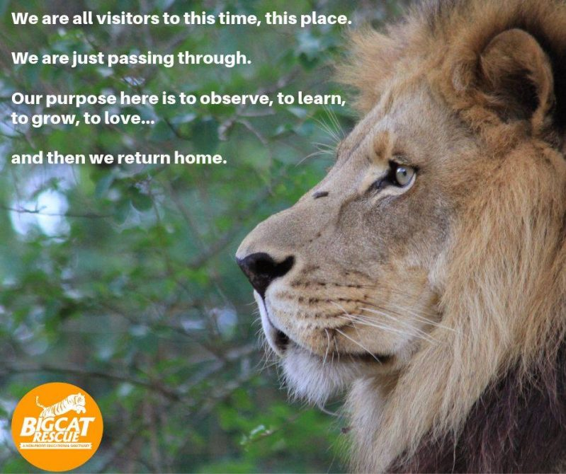 Memes and Quote of the Day - We are all visitors to this time, this place. We are just passing though. Our purpose here is to observe, to learn, to grow , to love .... and then we return home.