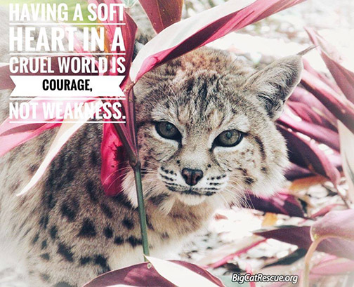 "Memes and Quote of the Day - ""Having a soft heart in a cruel world is courage, not weakness"""