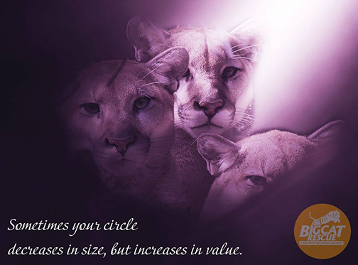 "Memes and Quote of the Day - ""Sometimes your circle decreases in size, but increases in value"""