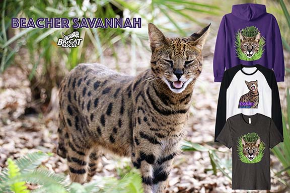 Big Cat Rescue Merchandise Beacher
