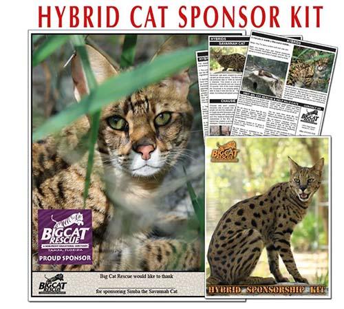 Hybrid Sponsor Kit websize