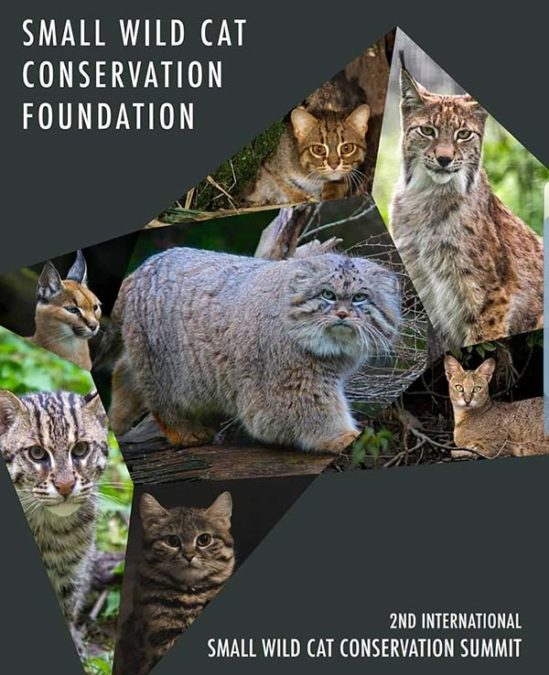 Small Wild Cat Conservation Summit is Sri Lanka