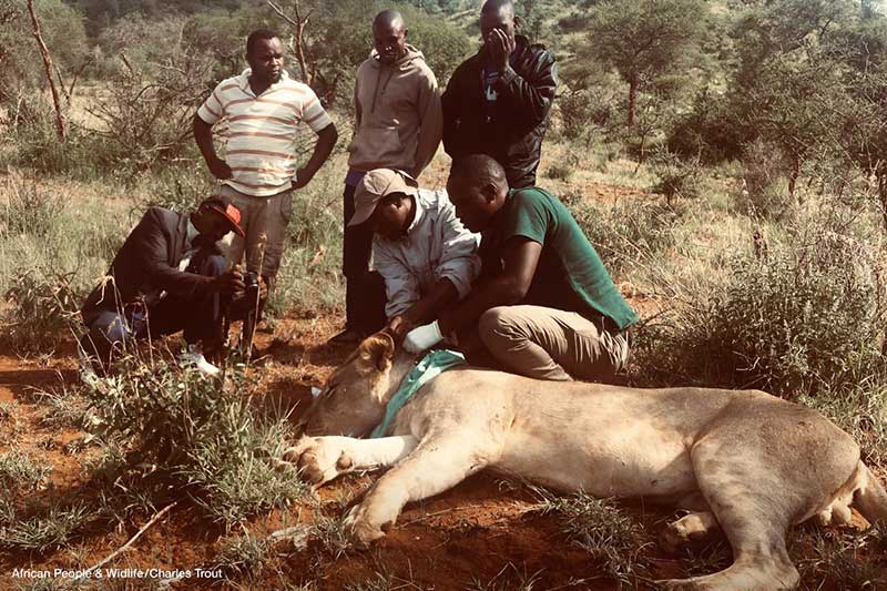 THE AFRICAN PEOPLE & WILDLIFE FUND Vets