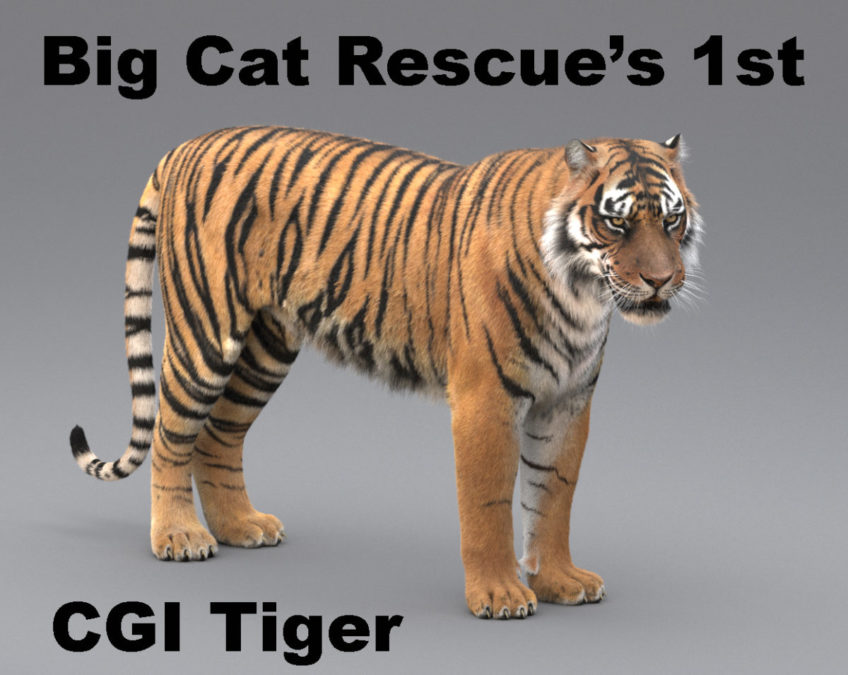 Big Cat Rescue's 1st CGI Tiger