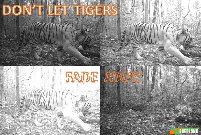 Freeland Preventing Tiger Extinction