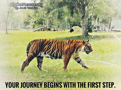 Inspirational Memes and Quote of the Day - Your journey begins with the first step.