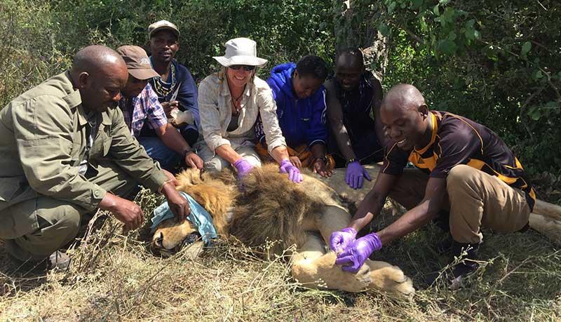 Kope Lion Vet Team
