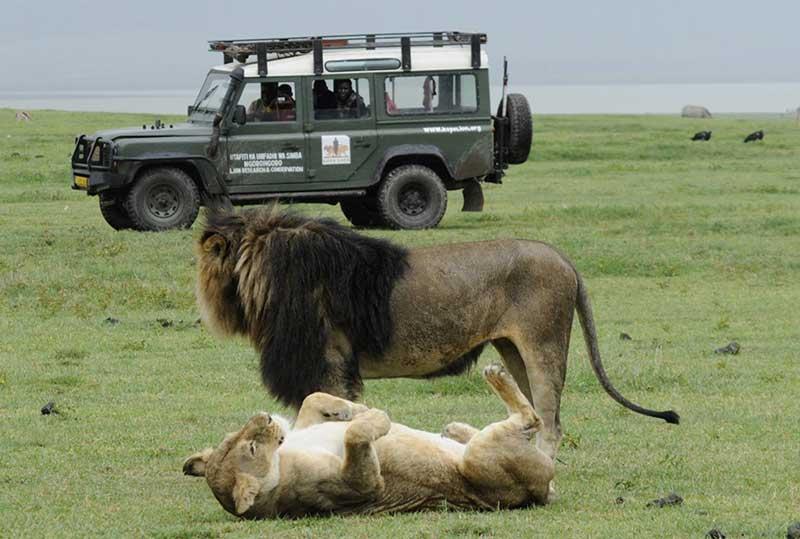 Kope Lion Male Female Jeep