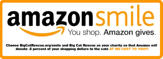 You shop. Amazon gives to Big Cat Rescue at BigCatRescue.org/smile