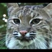 Big Cat Rescue 2008!!!