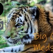 Keisha Tiger Gets Meds in 3D!
