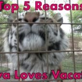 Top 5 Reasons Priya Tiger LOVES Vacation
