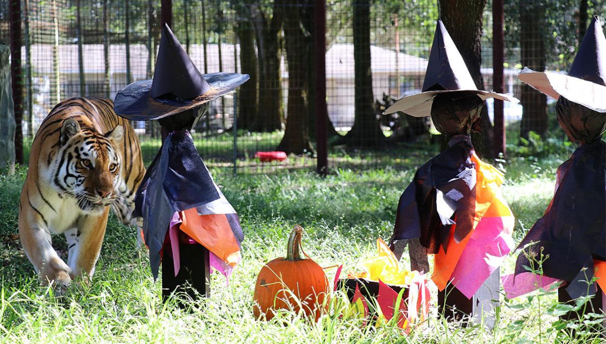 Dutchess-Halloween-enrichment