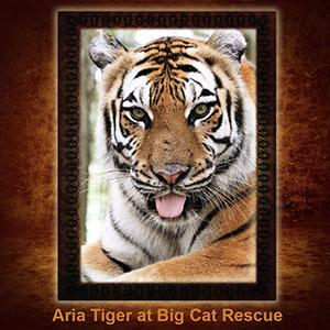 Aria Tiger NFT