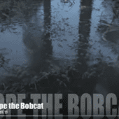 Hope the Bobcat 11