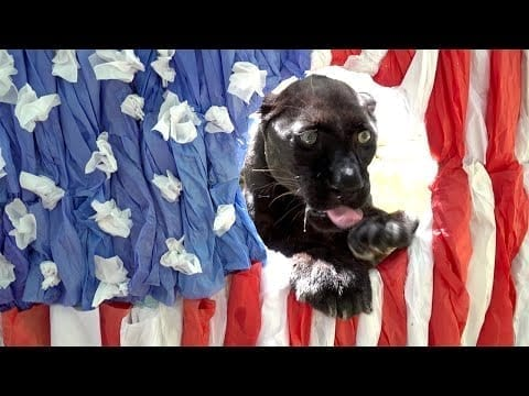 Treats For The Fourth With BIG Cats!