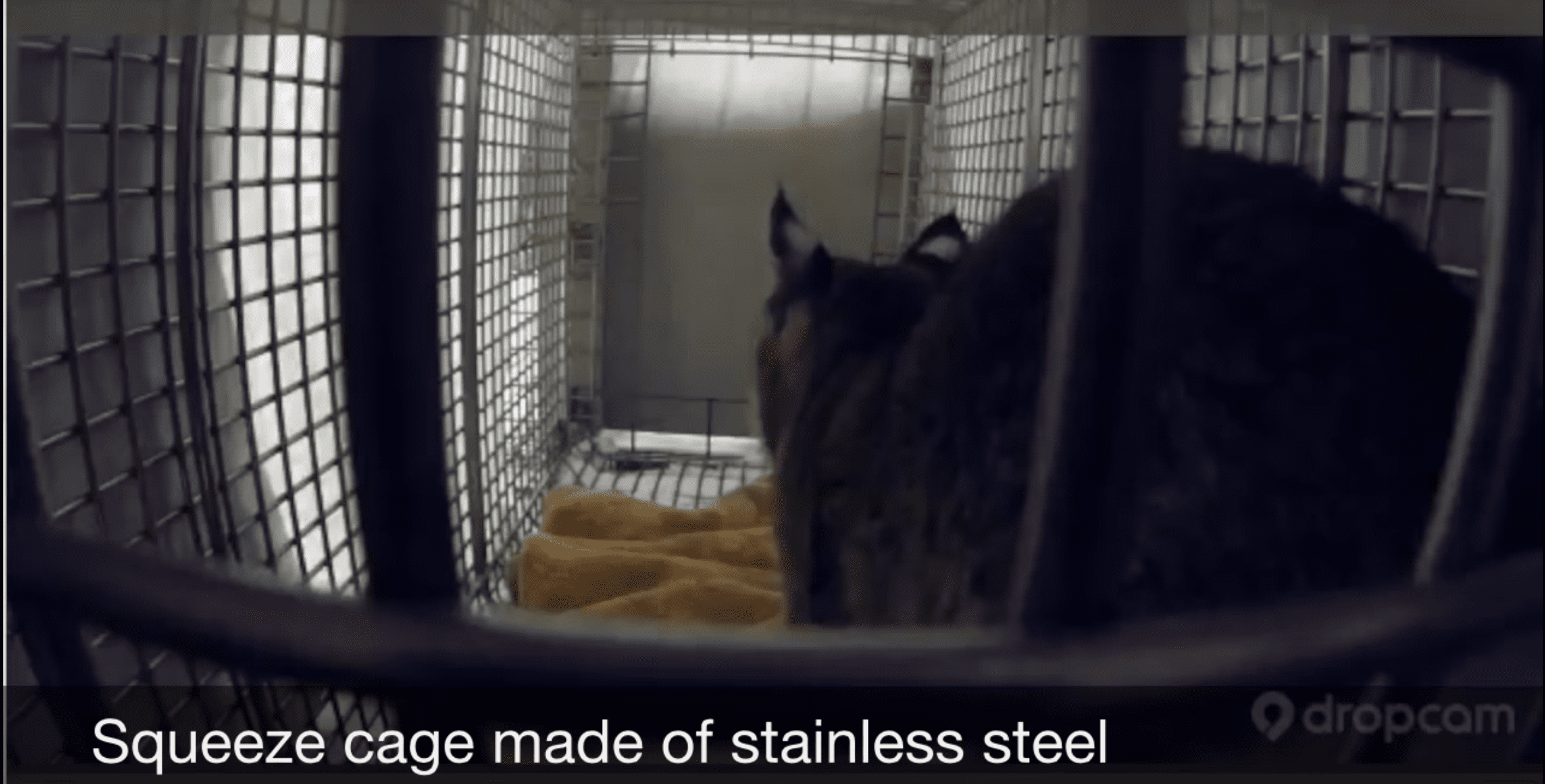 How to Shift Squeeze a Rehab Bobcat