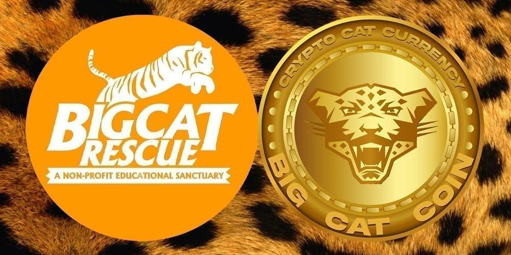 $CAT Coin Banner