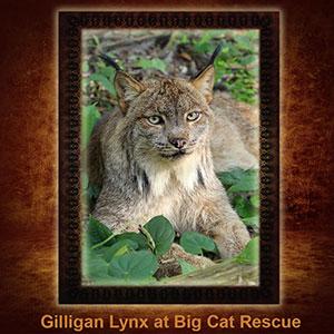NFT-Gilligan-Lynx