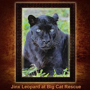 NFT-Jinx-Leopard