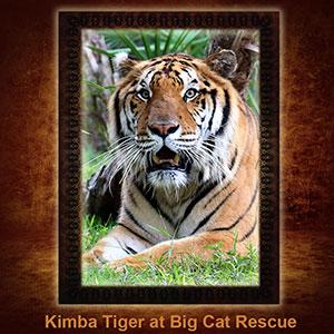 NFT-Kimba-Tiger