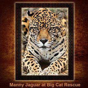 NFT-Manny-Jaguar