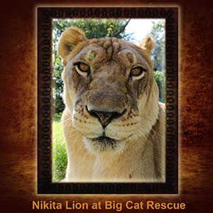 NFT-Nikita-Lion