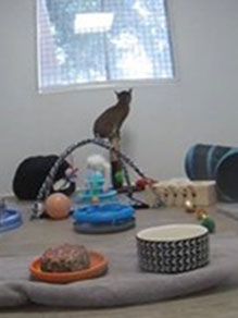 Nakoa in kitten room