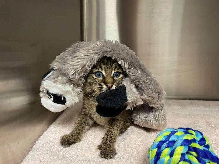 Summer bobcat cute toy