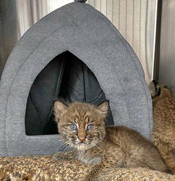 Ambrose rehab bobcat hut
