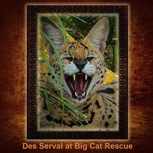 NFT-Des-Serval