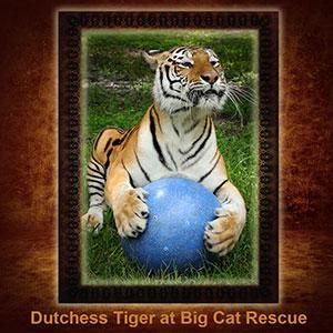 NFT-Dutchess-Tiger