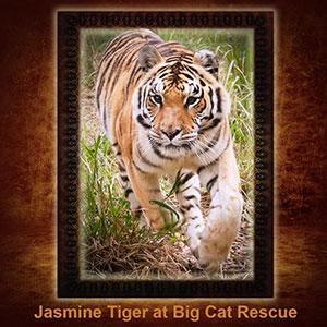 NFT-Jasmine-Tiger
