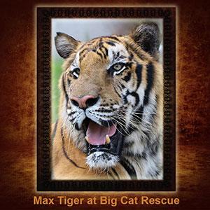 NFT-Max-Tiger